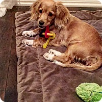 Adopt A Pet :: Mazzy - Orange, CA