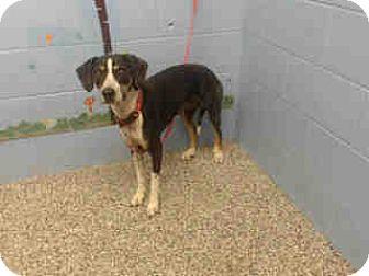 Beagle Mix Dog for adoption in San Bernardino, California - URGENT on 10/13 SAN BERNARDINO