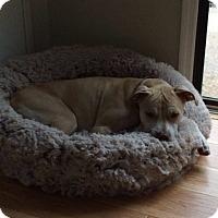 Adopt A Pet :: Bristol - Albemarle, NC