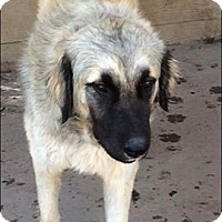 Adopt A Pet :: Solomon - Kyle, TX