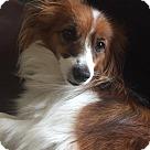 Adopt A Pet :: Finn