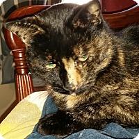 Adopt A Pet :: Bridgette - Buhl, ID