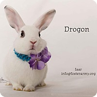 Adopt A Pet :: Drogon - Riverside, CA