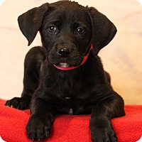 Adopt A Pet :: Balli - Waldorf, MD