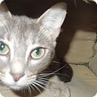 Adopt A Pet :: Muffett - Medina, OH