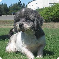 Adopt A Pet :: Rhett - Tumwater, WA