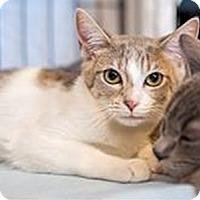 Adopt A Pet :: Triskit - Fredericksburg, VA