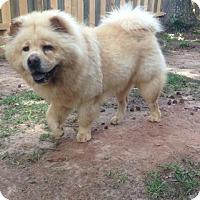 Adopt A Pet :: YOGI - Dix Hills, NY
