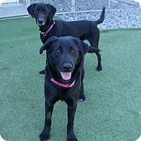 Adopt A Pet :: Wanda & Lady Bear - Falls Church, VA