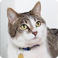 Adopt A Pet :: Rat - San Luis Obispo, CA