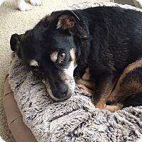 Adopt A Pet :: Mr. Frankie - Huntsville, AL