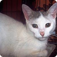 Adopt A Pet :: Jenny - brewerton, NY