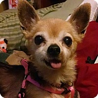 Adopt A Pet :: Gracie - Ft. Collins, CO