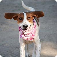 Adopt A Pet :: Hey There Delilah - Sacramento area, CA