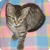 Adopt A Pet :: Sasha - Woodstock, ON