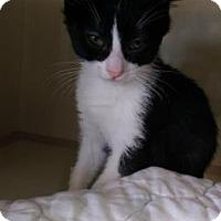 Adopt A Pet :: Dot - Fort Collins, CO