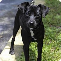 Adopt A Pet :: Johnny - Jupiter, FL