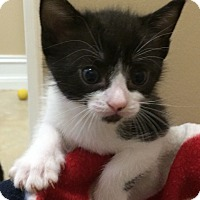 Adopt A Pet :: Henry - Delray Beach, FL