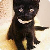 Adopt A Pet :: Cocoa - Tempe, AZ