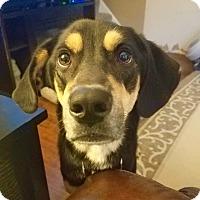 Adopt A Pet :: Winnie - Davenport, IA