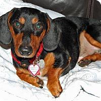 Adopt A Pet :: Buster #1 in TN - Columbia, TN