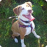 Adopt A Pet :: Hazel - Columbus, OH