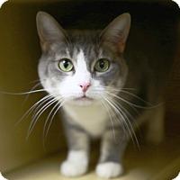 Adopt A Pet :: Camilla - Kettering, OH