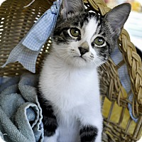 Adopt A Pet :: Cia (Super sweet) - New Smyrna Beach, FL