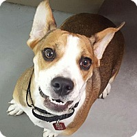 Adopt A Pet :: Star *LOCAL* MEET ME! - Wakefield, RI