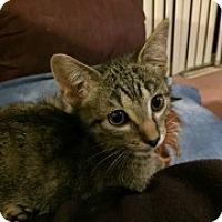 Adopt A Pet :: Denver - McHenry, IL