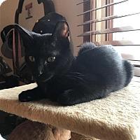 Adopt A Pet :: ZED - Kokomo, IN