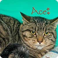 Adopt A Pet :: Ace - Somerset, PA