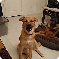 Adopt A Pet :: James - Phoenix, AZ