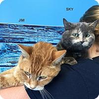 Adopt A Pet :: SKY - Hibbing, MN
