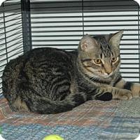 Adopt A Pet :: Baracuda - Bradenton, FL