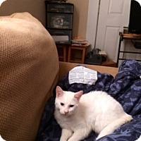 Adopt A Pet :: Gulliver - Corydon, IN
