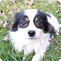 Adopt A Pet :: Tango - Mocksville, NC