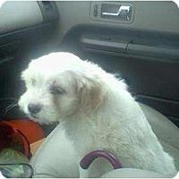 Adopt A Pet :: Cotton - Lexington, TN