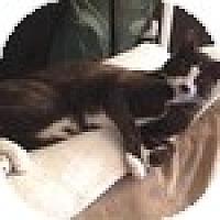 Adopt A Pet :: Macrae - Vancouver, BC