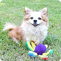 Adopt A Pet :: Brando - Mocksville, NC