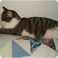 Adopt A Pet :: Abby in Keizer, OR - Keizer, OR