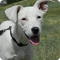 Adopt A Pet :: Mae - Cheyenne, WY