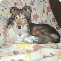 Adopt A Pet :: Olivia - Circle Pines, MN
