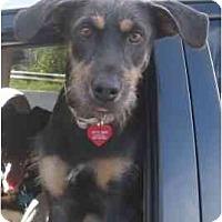 Adopt A Pet :: Betty Boop - Miami, FL