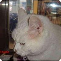 Adopt A Pet :: Estelle - Albany, NY