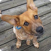 Adopt A Pet :: Calvin - Russellville, KY