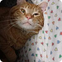Adopt A Pet :: Oliver - Chippewa Falls, WI