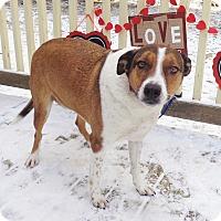 Adopt A Pet :: Kai - West Chicago, IL