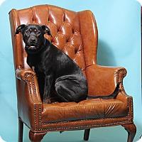 Adopt A Pet :: Jagger - Jackson, TN