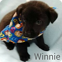 Adopt A Pet :: Winnie (ADOPTED) - Albany, NY